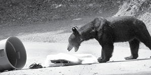 Bear in garbage photo.psd